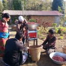 Coffee pulping